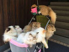 猫まみれのベビーカー