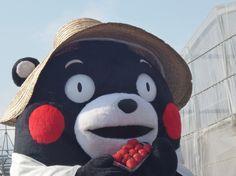 Kumamon くまモン