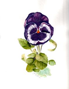 Water color - pansy, Tattoo idea to represent a quote I want to get about fighting and being stronger