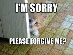 Add a bit of humor to apologizing with this adorable and funny I'm sorry meme collection. Im Sorry Meme, I Am Sorry Quotes, Forgive Me Meme, Apology Quotes For Him, I Miss You Meme, Apologizing Quotes, Bible Verses About Strength, Real Friendship Quotes, Cute Animal Memes