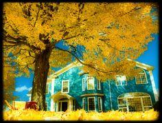 Golden autumn day in Kentville, Nova Scotia, Canada Swan Love, New Brunswick, The Province, S Pic, Nova Scotia, Landscape Photos, Homeland, Beautiful Places, Canada