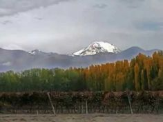 otoño en mendoza Mendoza, Mount Rainier, Mountains, World, Nature, Youtube, Travel, Naturaleza, Viajes