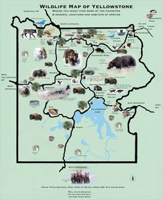 Wildlife Map of Yellowstone – the yellowstone daily – Photography Tour & park information National Parks Usa, Grand Teton National Park, Yellowstone National Park, Yellowstone Map, Yellowstone Vacation, Wyoming Vacation, Photography Tours, Road Trip Usa, Vacations