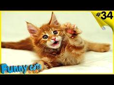 Коты веселятся. Смешные кошки шутки и приколы с котами