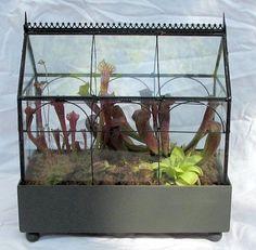 Amazon.com : Gothic House Carnivorous Terrarium (Wardian Case) - LIVE : Patio, Lawn & Garden