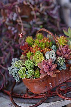 Nice succulent basket