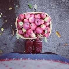Omas Äpfel pflücken.