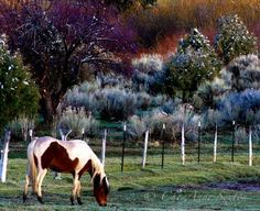 Mountain Spring Snow Storm w Pony in Meadow by CheyAnneSexton