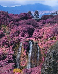 Pink and waterfall