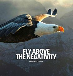 Fly above the negativity..