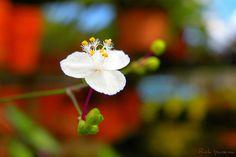 Good Flower Day | Hoje é o dia mais colorido do Flickr. Foto… | Flickr