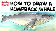Artist, and Derwent Product Manager, Sarah Taylor, shows you how to use the scale divider for replicating drawings and pictures to a larger or smaller scale. Whale Painting, Painting Tips, Watercolour Painting, Rock Painting, Watercolors, Music Aesthetic, Humpback Whale, Drawing Techniques, Learn To Draw