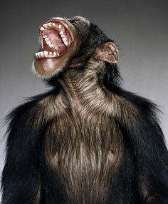 funny monkey portrait