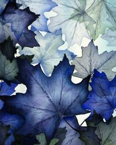 blue and white leaves