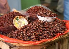 Oaxaca  If I ever go back to Oaxaca, I promise to have the guts to try a dried grasshopper!