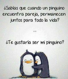 ¿Te gustaría ser mi pingüino? Las frases de amor mas lindas para enamorar.