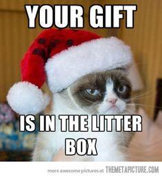 Grumpy cat shows his generosity…