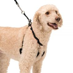 Dog Halter - Non-Pull No-Choke Humane Pet Training Halter Harness, Easy Step-in Vest Collar Halter for Control, Detachable Restraints & Sherpa Sleeves, Patented Dog Pull Control Technology by Sporn Dog Harness, Dog Leash, Engraved Dog Tags, Dog Food Online, Collar And Leash, Dog Collars, Dog Anxiety, Dog Id Tags