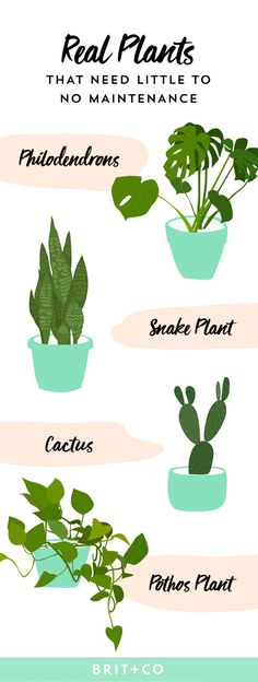 Look no further than this helpful guide for little to no maintenance house plants.