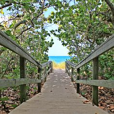 One of the many pathways to our beachside paradise here in Jupiter, FL.
