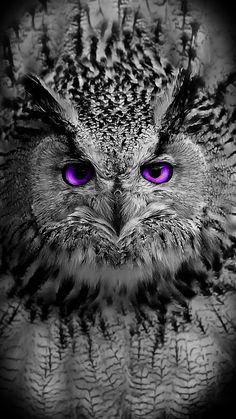 New Wall Paper Celular Fofo Coruja Ideas Beautiful Owl, Animals Beautiful, Cute Animals, Owl Photos, Owl Pictures, Owl Bird, Pet Birds, Realistic Owl Tattoo, Owl Tattoo Drawings