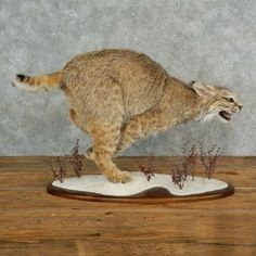 243 best taxidermy  animal skeletons images in 2019