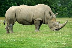 The Northern White Rhino is on the brink of extinction after the recent death of a female in a Czech zoo. Only three females remain, and unfortunately, they cannot breed. Urge wildlife authorities to take emergency action in safeguarding the remaining rhinos.