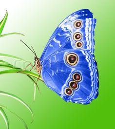 beautiful butterflies - a collection