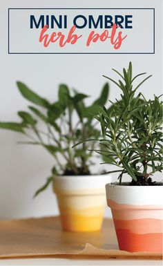 Make a set of these Mini Ombre Herb Pots for under $5! A good way to motivate you to make a home fresh dinner every night!