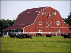 Red Barn Cattle Ranch