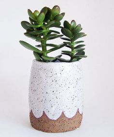 Vases – Home Decor : Going to call my jade plant Edward Appleby -Read More – Jade Plants, Potted Plants, Indoor Plants, Cacti And Succulents, Planting Succulents, Planting Flowers, Jade Succulent, Plantas Indoor, Decoration Plante