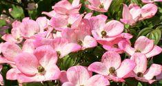 The Top 5 Best Bushes For Your Front Yard #landscaping #landscape #gardening #diy