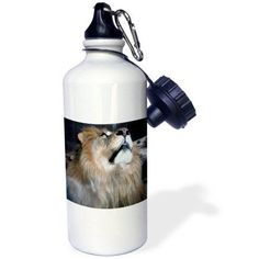 3dRose Lion, What is up, Sports Water Bottle, 21oz