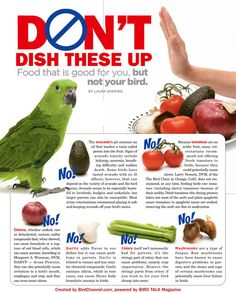 Don't Feed Your Pet Bird These Foods  For your pet bird's health and safety, avoid feeding avocado, celery, tomatoes, garlic, onions and mushrooms.