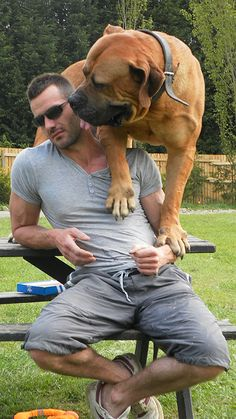 "South African Boerboel - So big and cuddle....yet so gentle! Boerboels are called ""Velcro"" dogs, always wanting to be with their owners. (wikipedia) http://www.topguardkennels.co.uk/"