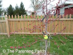 The Duck in the Crabapple Tree: The Rubber Ducky Project Week 24 | Parenting Patch