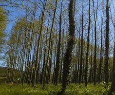 Decorar con bosques - Wit Lab