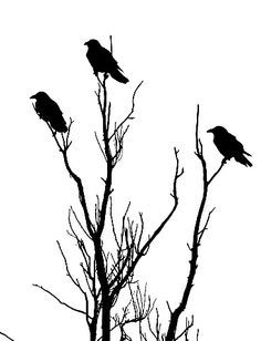 Ravens in Tree Stencil - IMAGE REPRODUCTION TECHNIQUES
