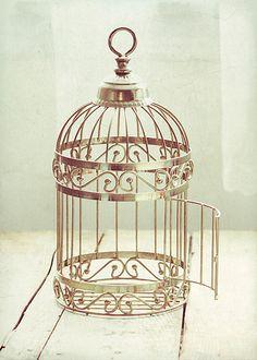 Flying Free… (by Alice M. Wingerden)