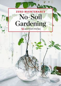 The No-Soil, Zero-Maintenance Method for Growing Houseplants Hyd. - The No-Soil, Zero-Maintenance Method for Growing Houseplants Hydroponic Gardening – How to Grow Plants In Water