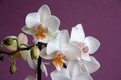 #orchid  #fiori #flowers #flowerpower #iloveflowers #white