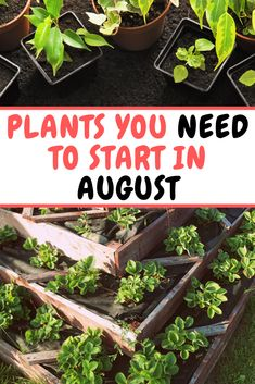 Plants you NEED to sow and grow in August Growing Greens, Growing Flowers, Planting Flowers, Growing Plants, Planting Vegetables, Growing Vegetables, Vegetable Garden, Veggie Gardens, Gardening Zones