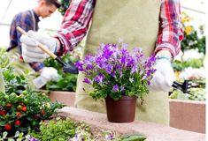 Çiçeklerin Dibine Tarçın Döküldüğünde - Sağlık Paylaşımları Aleo Vera, Floral Tie, Farmer, Table Decorations, Rose, Flowers, Plants, Home Decor, Allah