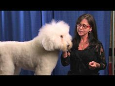 Pinned from Groomer TV-Choosing A Dog For Competitive Grooming