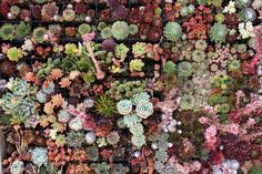Close Up of Living Wall at Flora Grubb