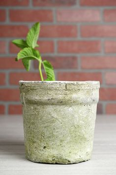 Weathered Clay Flower Pot 6.5""