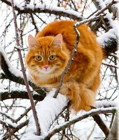 cat on snow branches