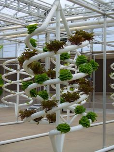 Hydroponic Gardening Ideas 20 Cool Vertical Garden Ideas - Vertical gardens are a great solution that will serve you as a garden decor element. We have rounded up this collection of Vertical Garden Ideas. Hydroponic Farming, Hydroponic Growing, Hydroponics System, Aquaponics Diy, Vertical Hydroponics, Indoor Vegetable Gardening, Greenhouse Gardening, Container Gardening, Urban Gardening