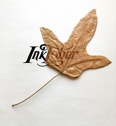 The time for Inktober has dawned! This year I'm inking on my collection of dried leaves, which will be a compelling challenge for me. My Collection, Make Art, Bored Panda, Happy Friday, Inktober, Autumn Leaves, Digital Art, Challenge, Halloween