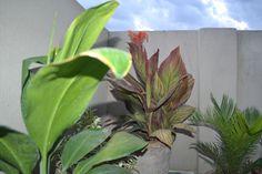 NATURE !! Nature Nature, Plants, Garden, Design, Garten, Planters, Gardening, Outdoor, Home Landscaping